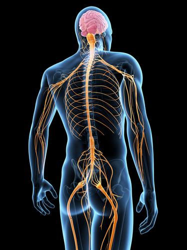 Immagine stilizzata del profilo neurmuscolare